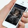 iPhone Display-Reparatur
