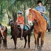 Half Off Two Horseback Trail Rides