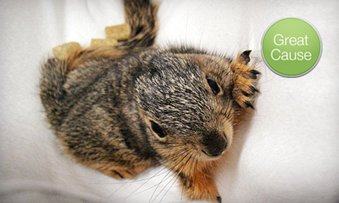 TWRC Wildlife Center: $10 Donation to Help Care for Baby Squirrels
