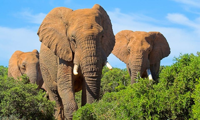 South Africa Tour with Airfare: 9-Day South Africa Tour with Round-Trip Airfare, Hotels, and Game Drives from Friendly Planet Travel