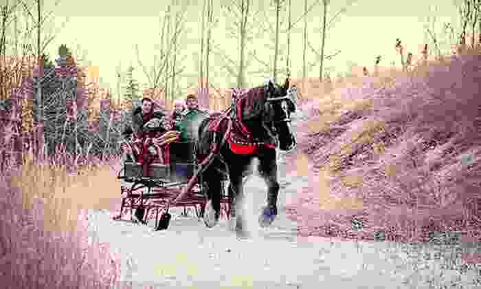 Horse Trekkin Alaska - Huffman / O' Malley: $125 for a Sleigh Ride for Up to Four with Hot Beverages from Horse Trekkin Alaska ($255 Value)
