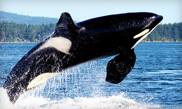 Mystic Sea Charters - Cap Sante Marina, Dock A: Orca Whale-Watching Tour for One, Two, or Four from Mystic Sea Charters (Up to 46% Off)