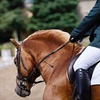 Up to 54% Off Horseback Riding or Pony Party