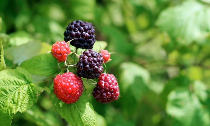Edible Foraging Tour - Lafayette Community Park: Identify Wild-Growing Edible Plants with a Foraging Expert