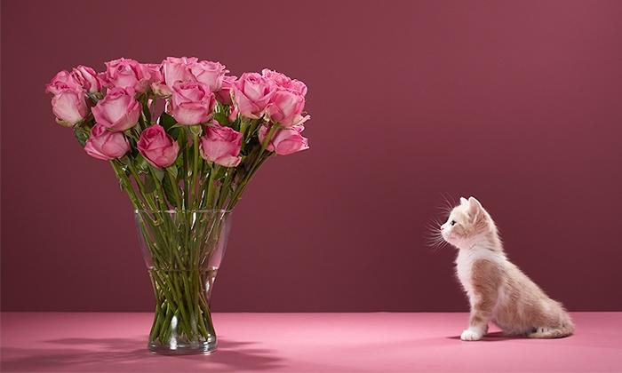 Floristería Mariflauers - Floristería Mariflauers: Ramo de 6, 12 o 18 rosas con color a elegir desde 12,95 € en Floristería Mariflauers