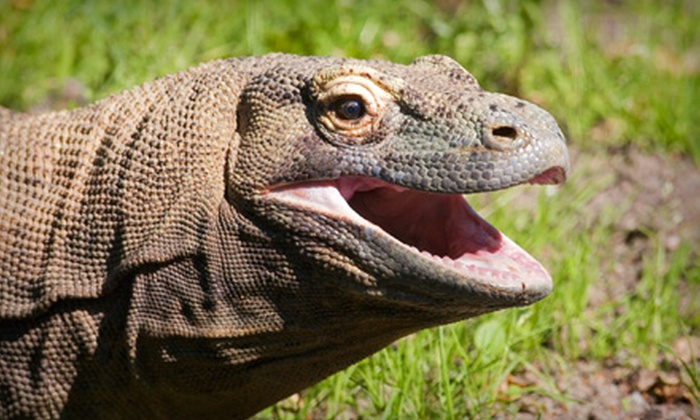 Scales Nature Park - Oro-Medonte: One or Three Reptile-Park Visits for Family of Two Adults and Two Children at Scales Nature Park (Up to 53% Off)