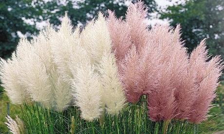 Set de 3 o 6 hierbas de la Pampa (envío gratuito)