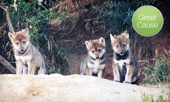 California Wolf Center - Julian: $10 or $30 Donation to Protect Wolves from Wildfires