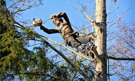 $85 for $250 towards Tree Trimming or Removal Services from Adam's Tree & Landscaping