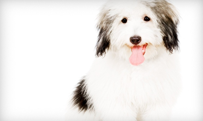 VIP Petcare Services - Akron / Canton: Pet Microchip, Indoor Adult-Cat Care Package, or Adult-Dog Care Package from VIP Petcare (Up to 62% Off)