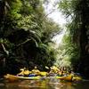 Three-Hour Glow Worm Kayak Trip