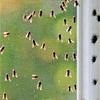 42% Off Pest Control Treatment