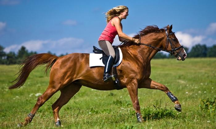 Pferdesportzentrum Donaustadt - Pferdesportzentrum Donaustadt: Reiten im Anfängerkurs mit 5x Longen-Unterricht à 25 Minuten im Pferdesportzentrum Donaustadt um 55 €