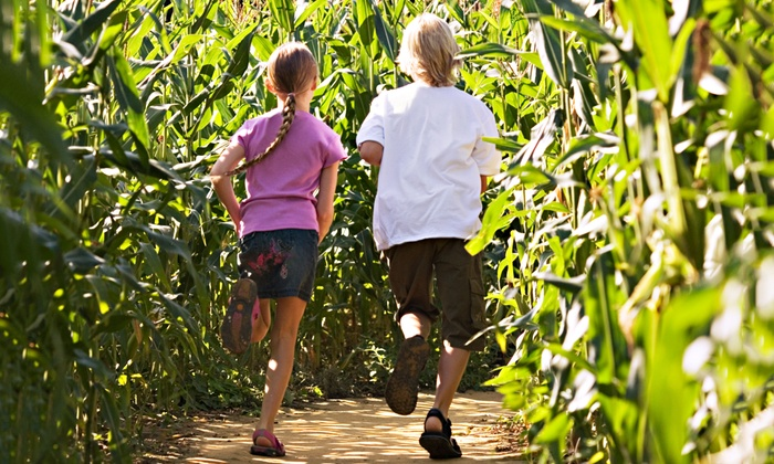 Keller's Farmstand - Oswego: Cinderella Corn Maze and Fall Activities for Two, Four, or Six at Keller's Farmstand Oswego (Up to 52% Off)
