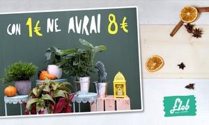 Flob Srls: Think in flower con Flobflower.com - Bonsai e piante per sorprendere a Natale. Spedizione gratuita in tutta Italia