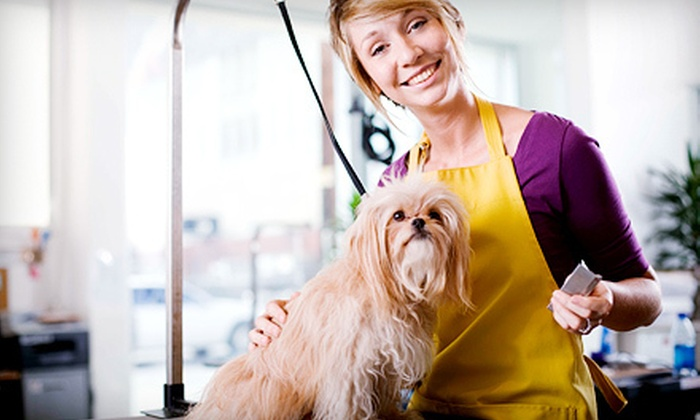 Merlin's Full-Service Pet Care - Town and Country: Dog-Grooming Packages or Boutique Boarding at Merlin's Full-Service Pet Care (Up to 58% Off). Five Options Available.