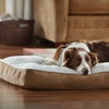 $25.99 for an Animal Planet Dog Beds