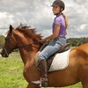 Up to 62% Off Horseback Riding in Myakka City