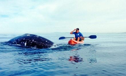 Tandem Kayak Tour of La Jolla Sea Caves or Whale-Watching Tandem Kayak Tour from Hike Bike Kayak (Up to 51%