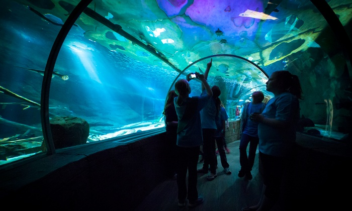SEA LIFE Minnesota Aquarium - South Loop: Visit for Two or Four to Sharks After Dark Event at Sea Life Minnesota Aquarium on Thursday, October 17 (Up to 52% Off)