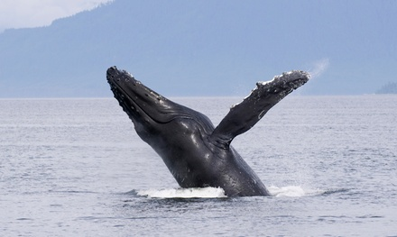 Whale-Watching and Nature Cruise for One or Two from Marina Del Rey Sportfishing (Up to 51% Off)