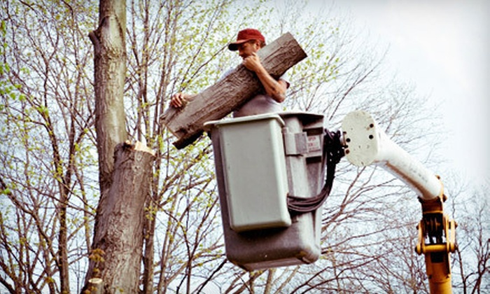 Affordable Tree Care - Indianapolis: Three or Six Man-Hours of Tree Trimming from Affordable Tree Care (43% Off)