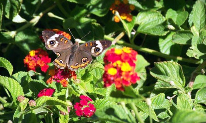 """Fort Worth Botanic Garden - Fort Worth: """"Butterflies in the Garden"""" Visit for Two or Four at Fort Worth Botanic Garden (Up to 53% Off)"""
