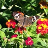 Fort Worth Botanic Garden – Up to 53% Off Butterfly Exhibit