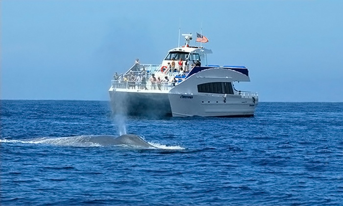 Harbor Breeze Cruises - Downtown Long Beach: Blue Whale-Watching Cruise tickets for Two or Four from Harbor Breeze Cruises (Up to 55% Off)