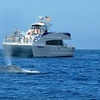 Up to 55% Off a Whale-Watching Cruise