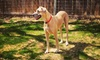 Shady Acres Pet Ranch - Brushy Creek: Dog Daycare or Dog Boarding for One or Two Dogs at Shady Acres Pet Ranch (Up to 51% Off). Five Options Available.