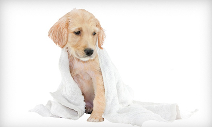 Interlachen Animal Hospital - Shoppes Of Interlachen: Grooming for a Small, Medium, Large, or Extra-Large Dog at Interlachen Animal Hospital in Winter Park (51% Off)