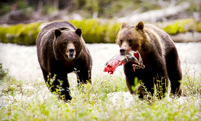 Discovery Marine Safaris - Campbell River: $225 for a Seven-Hour Grizzly Bear Expedition with Lunch from Discovery Marine Safaris ($333 Value)