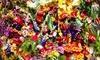 Up to 56% Off Flowers at D Garden Floratique