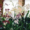 Half Off at New Earth Orchids in Santa Fe