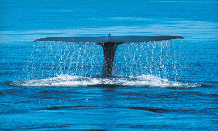 Harbor Breeze Cruises - Long Beach: $45 for a Blue-Whale-Watching Cruise for Two from Harbor Breeze Cruises in Long Beach (Up to $100 Value)