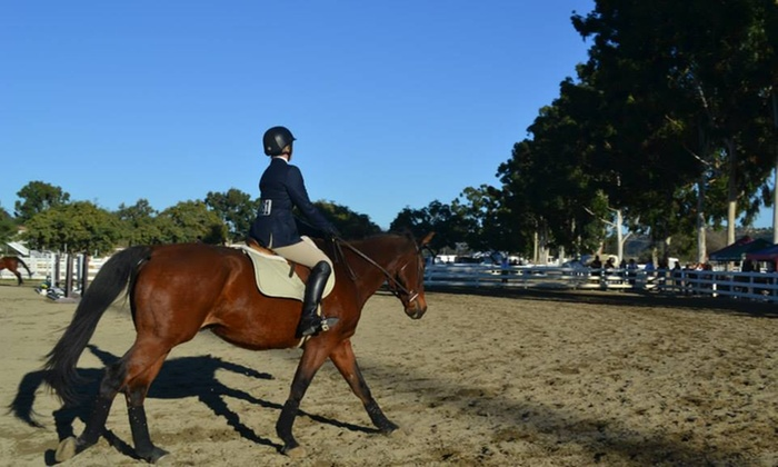 Rose Ranch Performance Horses - Gilbert: Two Horseback-Riding Lessons at Rose Ranch Performance Horses (65% Off)