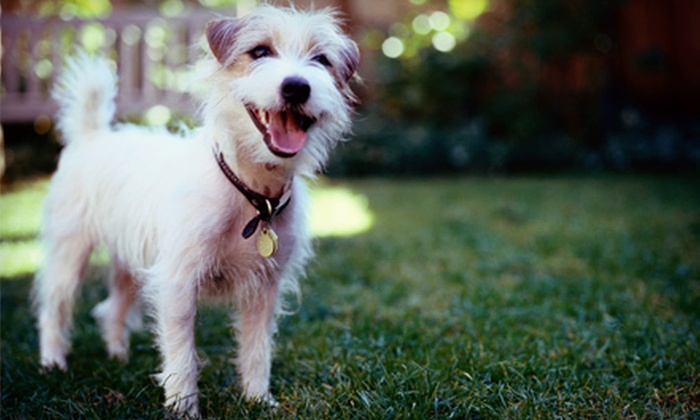 Dogstown University - Lakeview: Two Days of Dog Daycare or Three Nights of Dog Boarding at Dogstown University in Deerfield Beach (Up to 69% Off)