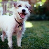 Up to 69% Off Dog Care in Deerfield Beach