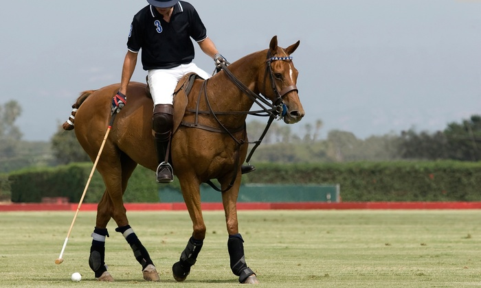 The Dallas Polo Club - Ferris: Two or Four Polo and Riding Lessons at The Dallas Polo Club (Up to 69% Off)
