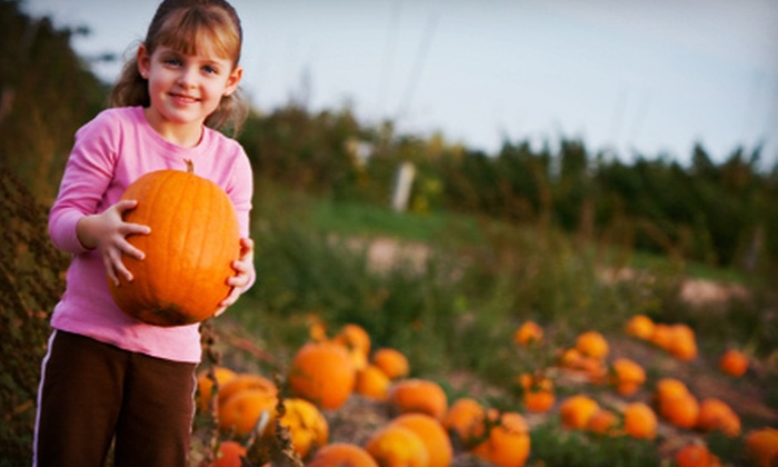 Porter's Patch - Lessor: Fall Family Fun with Pumpkin Picking, Hayrides, and Corn Maze for Two or Four at Porter's Patch (Up to 51% Off)