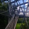 Half Off Treetop Canopy Tour