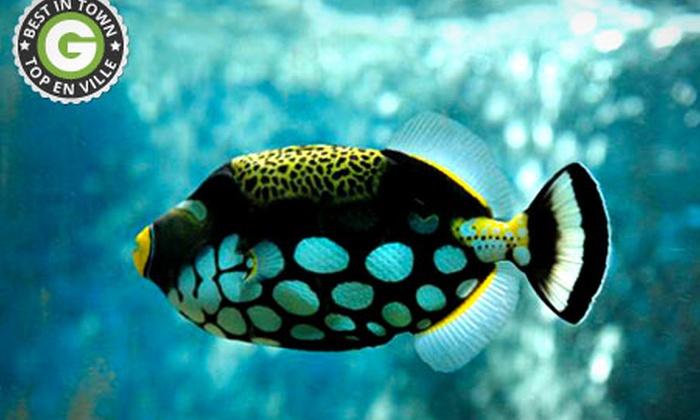 AQUARIUM DES CEVENNES - Saint Jean Du Gard: 2, 4 ou 6 entrées pour l'Aquarium de St-Jean du Gard dès 8 € et jusqu'à 60 % de remise