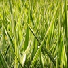 Up to 53% Off Canada Grass Seed