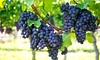 River City Blues Society - Salisbury: Entry to Blues in the Vineyard with Winemaker's Tour for 2 or 4 from River City Blues Society (Up to 54% Off)