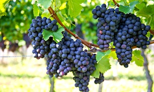 Dove Valley Wine: Concert Tickets and Wine for Two or Four at Dove Valley Wine (Up to 51% Off)