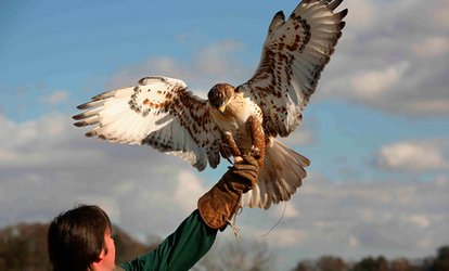 image for Two-Hour Bird of Prey Experience at Raptor World (62% Off)