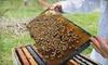 Hunter's Honey Farm - Ashland: $10 for a 45-Minute Honey Barn Tour for Four at Hunter's Honey Farm in Martinsville ($19.80 Value)