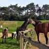 Lezioni di equitazione per adulti e bambini