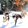 Up to 41% Off Dogsledding Experience